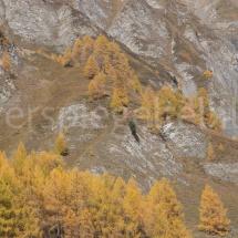 Felsiger Berg mit gelben Lärchen