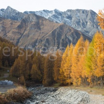 Herbstlandschaft mit gelben Lärchen und Bergen im Hintergrund