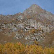Bergpanorama mit gelben Lärchen