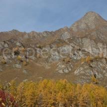 Bergpanorama mit gelben Lärchen und einem Lärchenwald im Vordergrund
