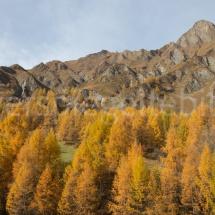 Bergpanorama mit gelbem Lärchenwald im Vordergrund