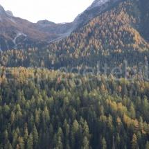 Lärchenwald an Berghängen, vereinzelt mit gelben Lärchen