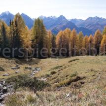 Lärchen auf einer Alpwiese vor Bergpanorama oberhalb von Scuol