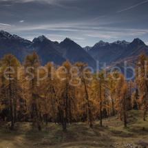 Lärchen vor Bergpanorama oberhalb von Scuol