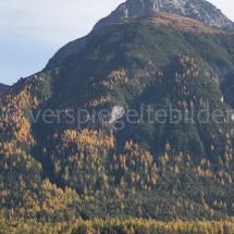 Blick auf einen steilen Berg mit Wald und gelben Lärchentupfen