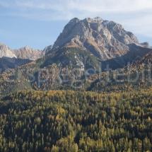 Berglandschaft mit Wäldern und gelben Lärchentupfern